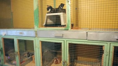 Animal shelter, animals in cages at the animal shelter — Stockvideo