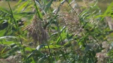 Tráva kymácí ve větru — Stock video