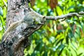 Tree shrew on tree — Stock Photo