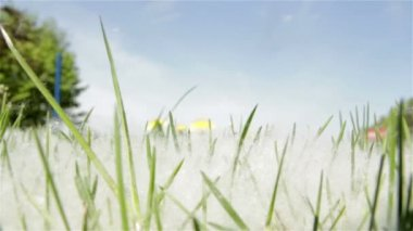 Poplar fluff in the grass on which the wind blows — Stock Video