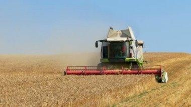 Colheitadeira reúne o trigo — Vídeo stock