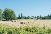 Haystack in meadows — Stock Photo