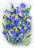 Watercolor still life with beautiful blue iris flowers — Stock Photo