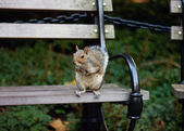 Squirrel on bench — Stock Photo