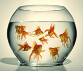 Goldfish in bowl — Stock Photo