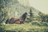 Horse on a green meadow — Stock Photo