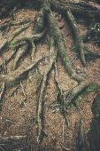 Amazing Chaos Tree Roots — Stok fotoğraf
