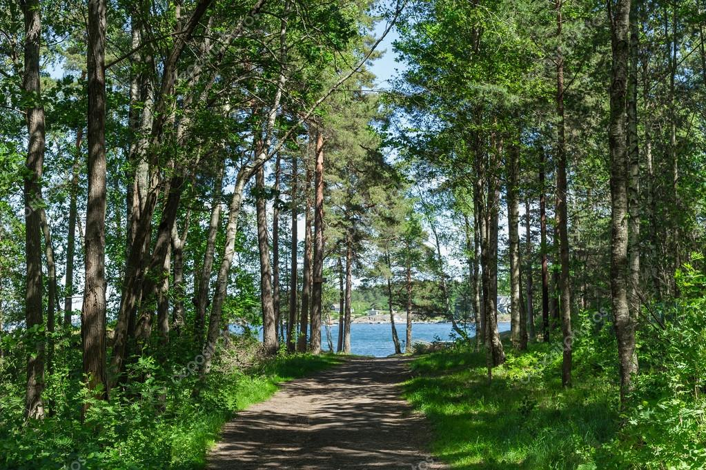 Фотообои Footpath between trees in green dark forest and sea