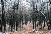 Vägen i skogen — Stockfoto