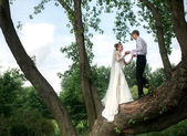 Bride and groom on the tree — Stock Photo