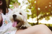 Little dog with a girl — Stock Photo