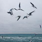 Flying seagulls — Stock Photo