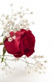 Roses bouquet on white — Stock Photo