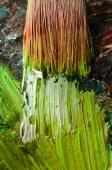 Artist's Old Brush — Fotografia Stock