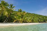 Palm Trees on Caribbean Beach — Stock Photo
