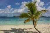 Single Palm Tree in Caribbean — Zdjęcie stockowe