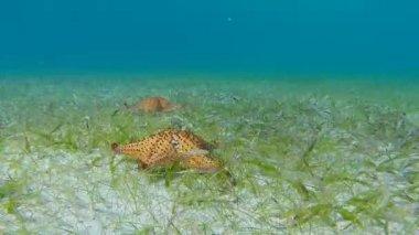 Starfish movement at High Speed — Stock Video