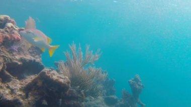 Fish Swimming on Reef — Stock Video