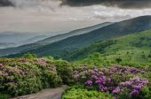сад рододендрон с туманного чалая гора — Стоковое фото