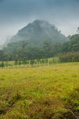 Yellow field with mountain in the fog — Stok fotoğraf