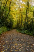 Trail Underneath Changing Leaves — Stock Photo