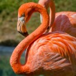 Pink Flamingos — Stock Photo #59184351