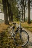 Cruiser Bike on a Dirt Path — Stock Photo