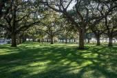 Vit punkt trädgård Charleston Sc — Stockfoto