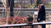 Central Park fauna — Stock Photo