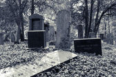 Enchanted Cemetery — Photo