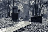 Enchanted Cemetery — Stockfoto