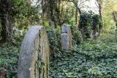 Enchanted Cemetery — Foto Stock