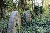 Enchanted Cemetery — Zdjęcie stockowe