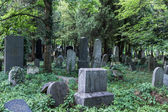 Enchanted Cemetery — Foto de Stock