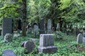 Enchanted Cemetery — Stock Photo