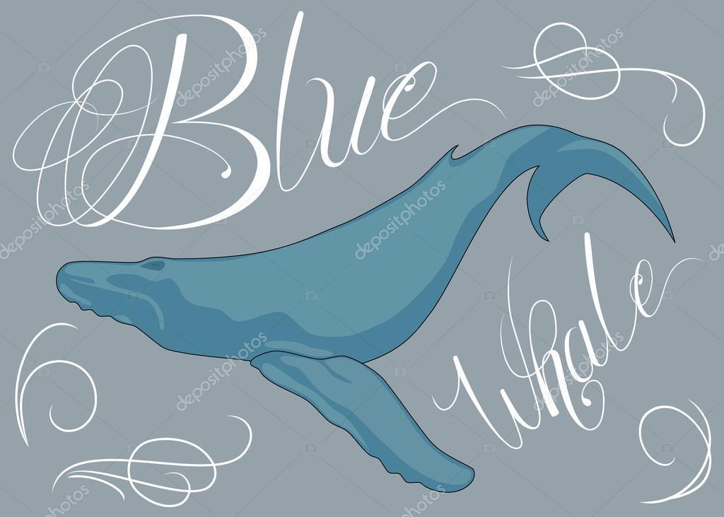 蓝鲸— 图库矢量图像08