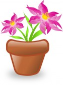 Pink flower in flowerpot — Stock Photo