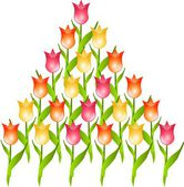 Pyramid of tulips — Foto Stock