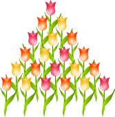 Pyramid of tulips — Stockfoto