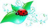 One ladybug on leaves — Stock Photo