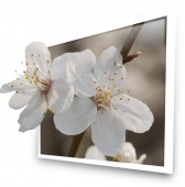White blooms — Stock Photo