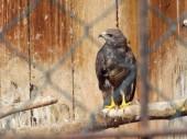 Bird in cage — Stock Photo