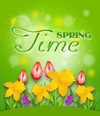 Shine Spring Time — Stock Photo