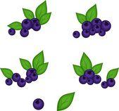 Vector blueberry — Stock Photo