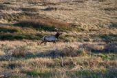Deer in the wilderness — Stock Photo