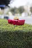 Red gift box on a hedge — Stock Photo