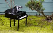 Toy piano in the garden — Stock Photo