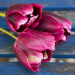 Three purple tulips on a blue rustic table — Stock Photo #74745513
