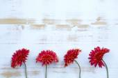 Red gerbera on white rustic wooden background — Stock Photo