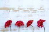 素朴な木製の白地に赤のガーベラ — ストック写真